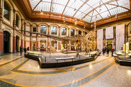 Berlin, Germany - December, 2019: Giant skeletons of Brachiosaurus and Diplodocus in Natural History Museum.