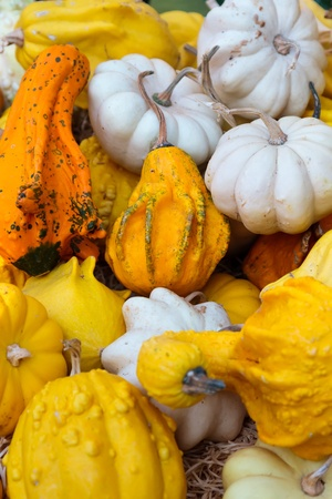 Decorative pumpkins  Market Detail Stock Photo