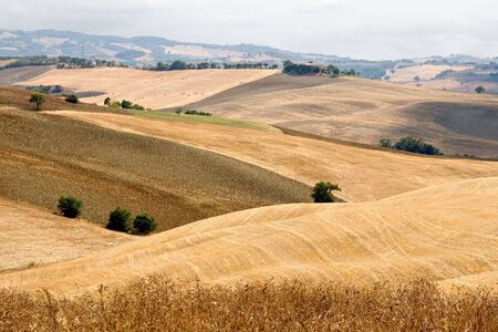 diagonals: Beautiful summer landscape in Tuscany