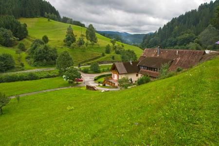 jungle green: Hermoso paisaje en la selva negra, Alemania