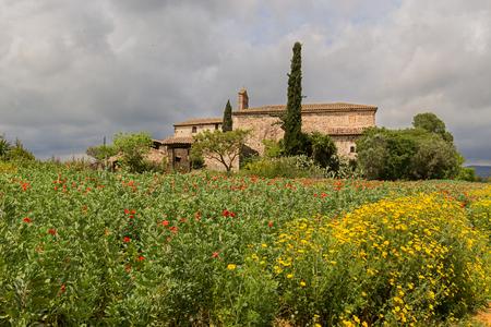 黄色のデイジーとカタルーニャ州の農村部の国の家の周りにケシ畑