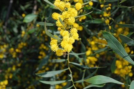naturaleza: Abeja en una flor. Stock Photo