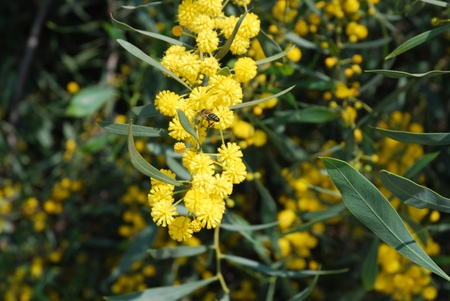 flor: Abeja en una flor. Stock Photo