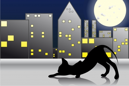 este: Night Cat