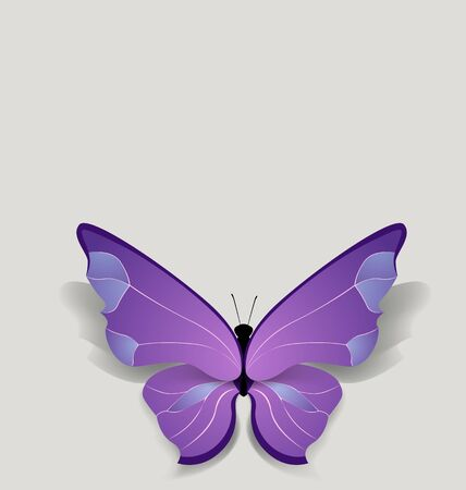 bulk: bulk brigt lilac butterfly on pure background Illustration