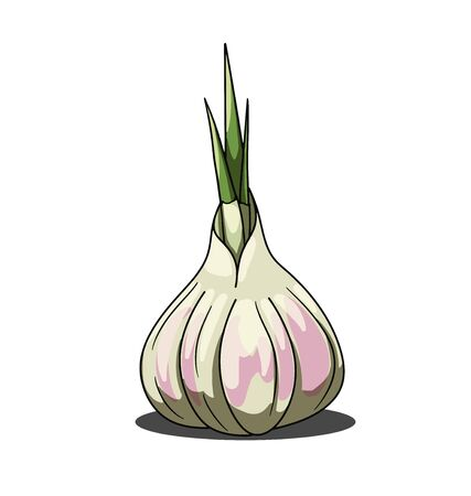 Single gray garlic isolated on white background
