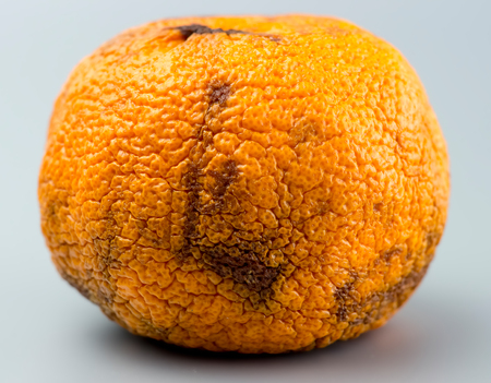 Closeup rotten orange with black spots on grey background Stock Photo