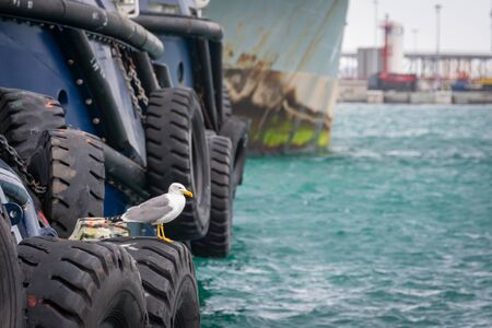 Seagulls perched on huge wheels that are used by tugboats to get close to the boats and be able to push them.