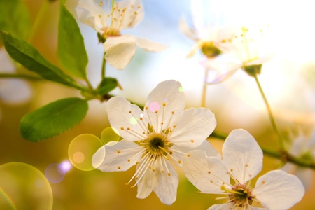 Flower branch in the Spring Stock Photo - 17248102
