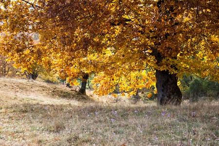 sere: Red yellow foliage on tree Stock Photo