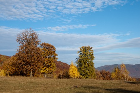 autumn landscape trees Stock Photo