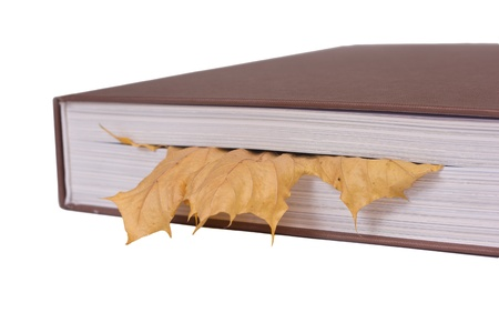 leaf bookmark concept Stock Photo