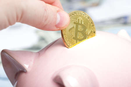 net: Piggy bank, hand holds golden bitcoin coin virtual money. Cryptocurrency and saving concept Stock Photo