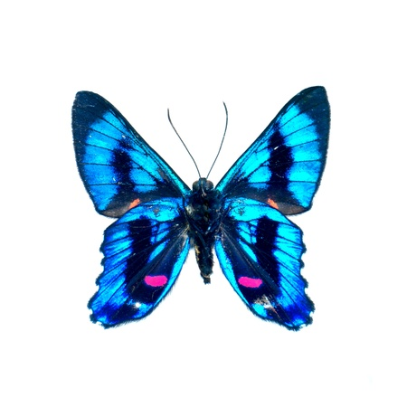 color butterfly: butterfly