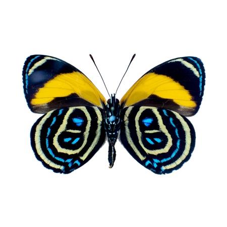Schmetterling Standard-Bild - 17815270