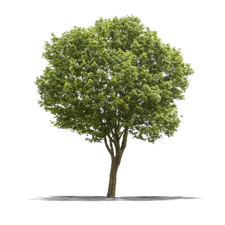 life metaphor: View of a Green tree on a white background