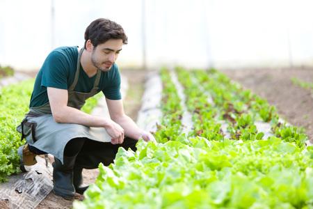 verify: Vista di un giovane agricoltore attraente verificare progresso della cultura Archivio Fotografico