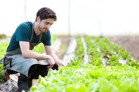 verify: Vista di un giovane contadino attraente verificare progresso della cultura