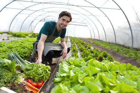 View of a Young attractive farmer harvesting vegetables 版權商用圖片