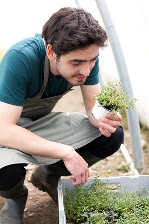 verify: Veduta di un giovane agricoltore attraente verificare progresso della cultura