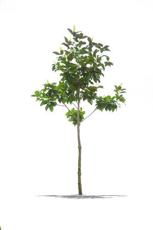 白地に緑の美しいツリーのビュー 写真素材 - 28677653