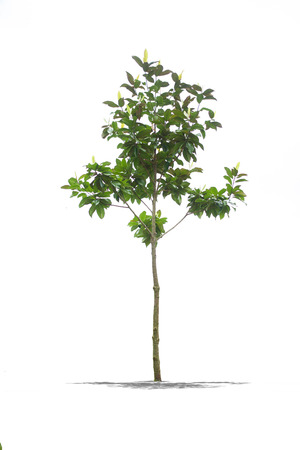 View of Beautifull green tree on a white