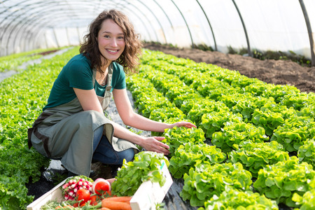 View of an Young attractive woman harvesting vegetable in a greenhouse Foto de archivo