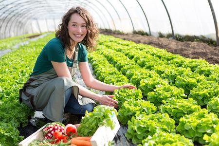 Vue d'une jolie jeune femme de récolte de légumes en serre