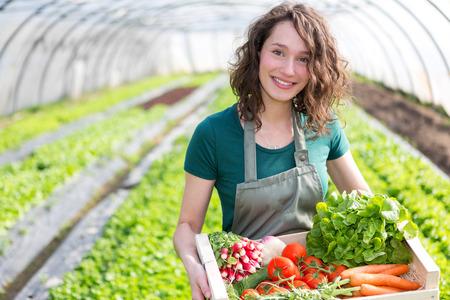 温室野菜の収穫の魅力的な若い女性のビュー 写真素材