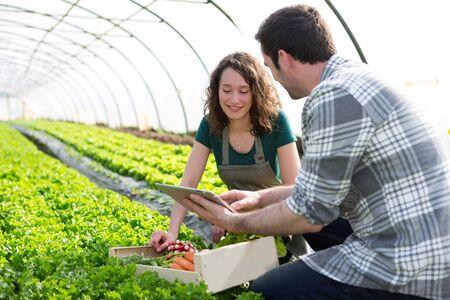 View of a Farmer teaching new employee to gardening Stock Photo