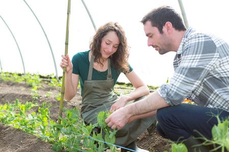 agricultor: Vista de un granjero enseñando nuevo empleado a la jardinería Foto de archivo