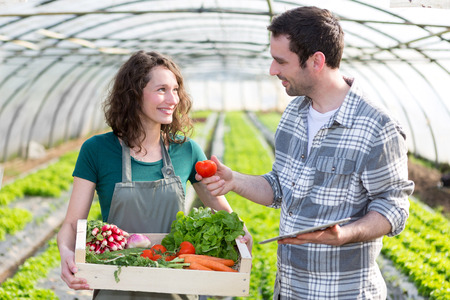 new employee: View of a Farmer teaching new employee to gardening Stock Photo