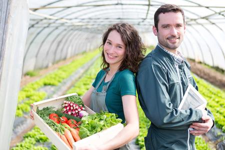 granjero: Vista de un equipo granjero en el trabajo en un invernadero Foto de archivo