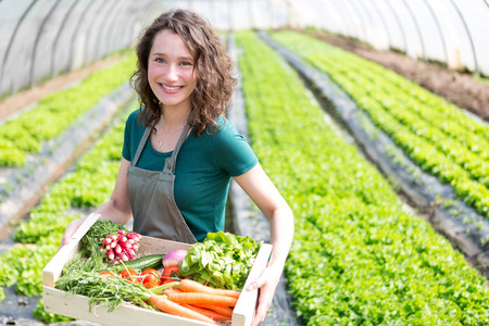 View of an Young attractive woman harvesting vegetable in a greenhouse Standard-Bild