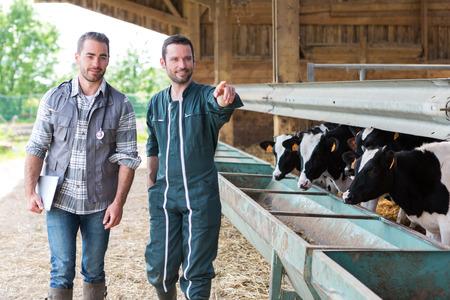veterinaria: Vista de un granjero y veterinarios que trabajan juntos en un granero