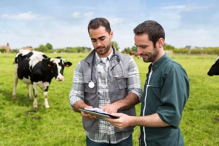 農家と家畜牛と masture で一緒に作業ビュー 写真素材