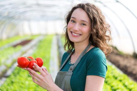 agricultor: Vista de un Jóvenes cosecha los tomates atractiva agricultores Foto de archivo