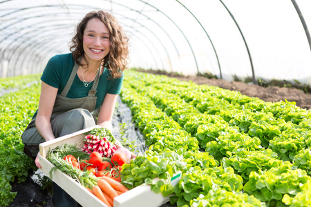 View of an Young attractive woman harvesting vegetable in a greenhouse Stockfoto