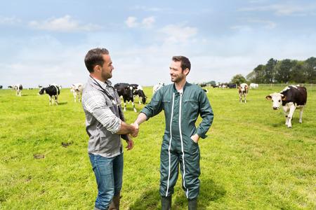agricultor: Vista de un granjero y veterinarios que trabajan juntos en un masture con las vacas