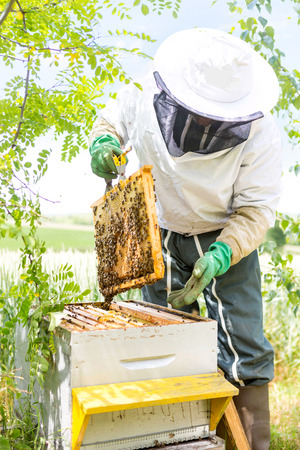 VIew of a Beekeeper working on his beehives in the garden