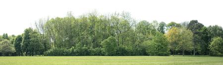 Vista de una alta definición Treeline aislado en un fondo blanco Foto de archivo - 80318446