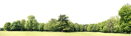 Blick auf eine High-Definition-Treeline auf einem weißen Hintergrund Standard-Bild - 82236546