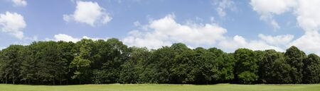 View of a Very high definition Treeline with a colorful blue sky Reklamní fotografie