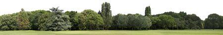 Very high definition Treeline isolated on a white background Reklamní fotografie
