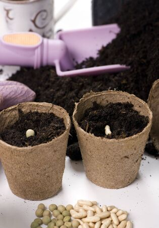 Two small pots with freshly planted seeds... ready for spring Imagens