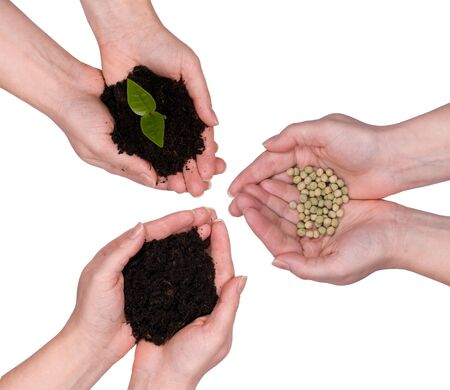 Hands hold the three stages of life, from the seed to the earth to the plant. photo