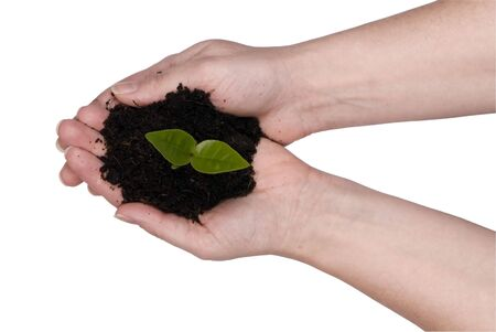 Two hands holding a seedling ready for planting. clipping path photo