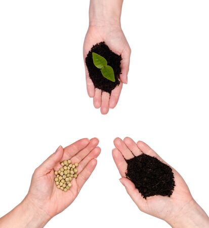 Single out stretched hands represent the cycle of life from the earth and seeds to new growth.  photo