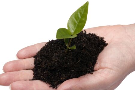 A new seedling in an open hand awaits planting. clipping path photo