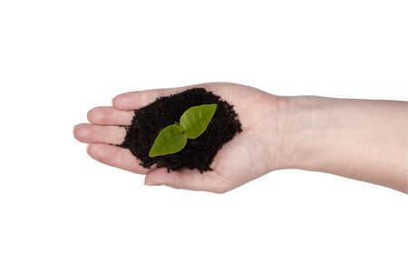 A single out stretched hand with a new seedling in it. Spring time, new life, growth. Clipping path photo